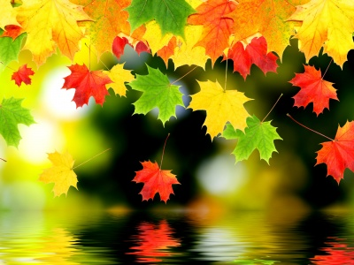3d Autumn Leaves (click to view)