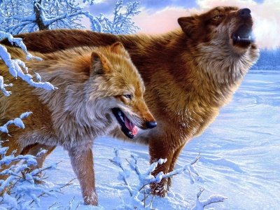 Amazing Wolves1 (click to view)