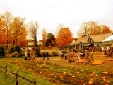 Autumn Pumpkin Festival