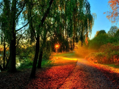 Autumn Sunset In The Park (click to view)