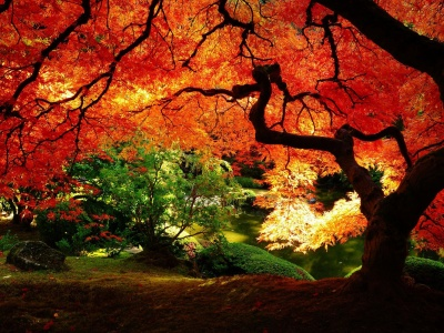 Autumn Tree Nature (click to view)