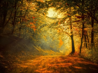 Autumn Trees Road Forest (click to view)