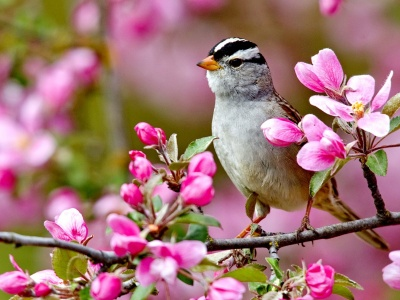 Bird On A Blossom Branch Spring (click to view)