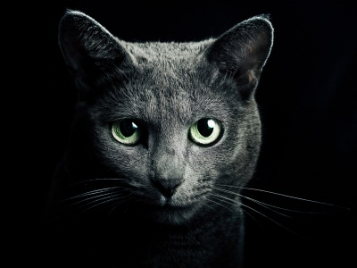 Black Cat Green Eyes (click to view)