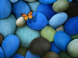 Blue Stones And Butterfly