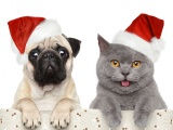 Cat Dog Funny Christmas