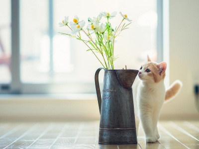 Cat Kitten Vase Flowers (click to view)