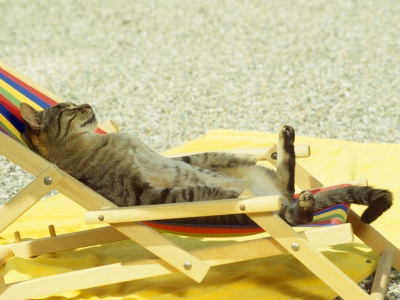 Cat Relaxing On Lounge Chair (click to view)