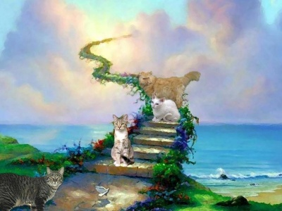 Cats And Heaven (click to view)