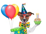 Cheerful Dog On Birthday