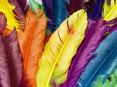 Colorful Feathers (click to view)