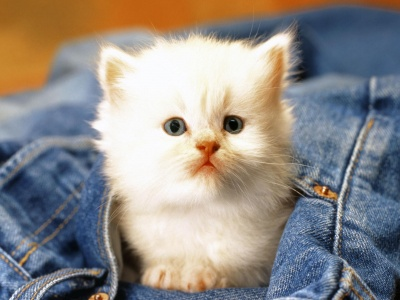 Cute Cat Baby (click to view)