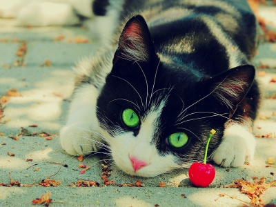 Cute Cat Photography