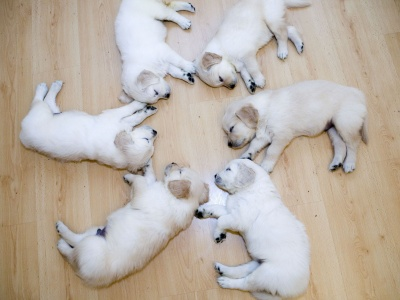 Cute Dog Puppies (click to view)