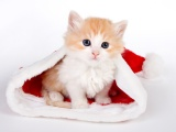 Cute Kitten In Santa Hat