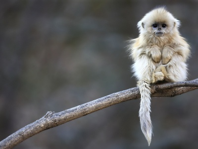 Cute Monkey Animal (click to view)
