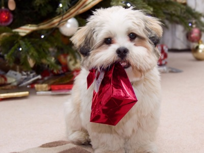 Cute Puppy With Present Gifts Christmas Tree