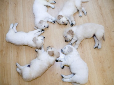 Cute Sleeping Puppies Animal Funny (click to view)