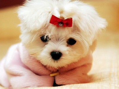 Cute White Puppy (click to view)