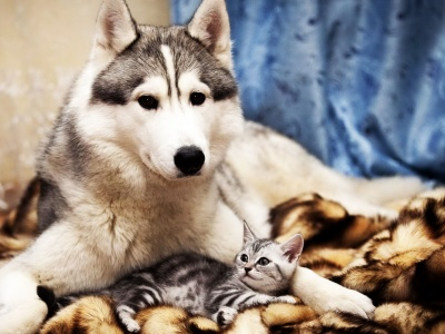 Dog And Cat Friends (click to view)