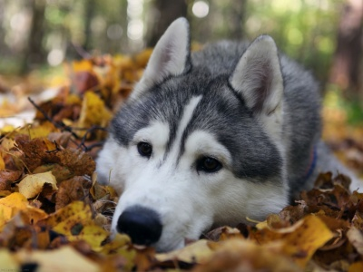 Dog Muzzle Grass Leaves (click to view)