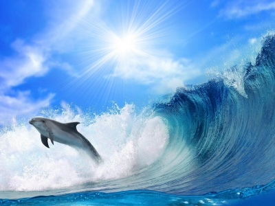 Dolphin Jump (click to view)
