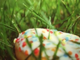 Donut In The Grass