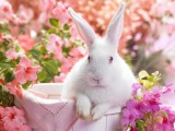 Easter Bunny Holiday Wallpaper