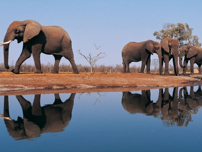 Elephants Around Lake (click to view)
