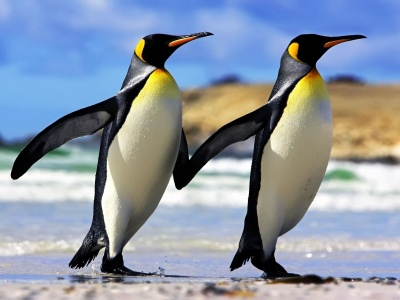 Emperor Penguins (click to view)
