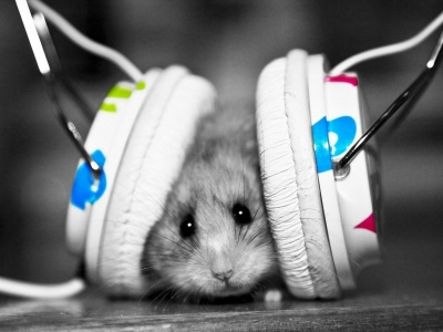 Enjoy Music Animal (click to view)