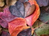 Fall In Love Leaves