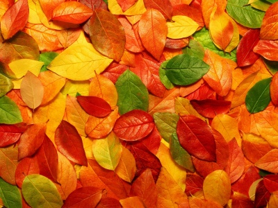 Fall Leaves Autumn 3d (click to view)