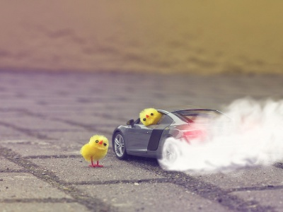 Funny Yellow Chickens In Audi R8 (click to view)