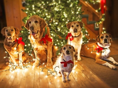 Holidays Christmas Dogs Lights (click to view)