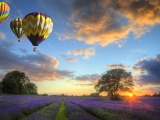 Hot Air Balloons Flying Over Land
