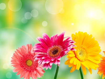 Image Of Spring Flowers (click to view)