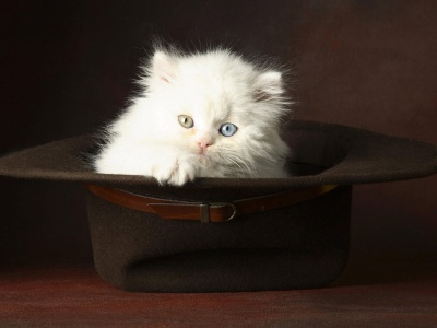 Kitten In A Hat Animal (click to view)