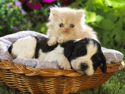 Kitten Puppy Basket Bed (click to view)