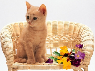 Kitten Sitting Flowers Red (click to view)
