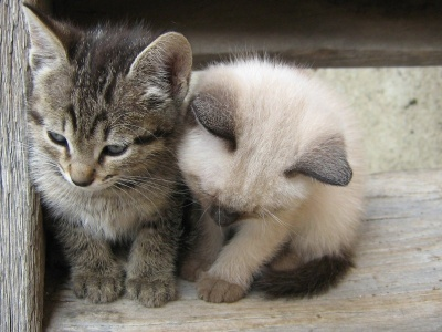 Kittens White Black Kids (click to view)