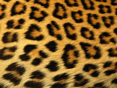 Leopard Skin Texture (click to view)