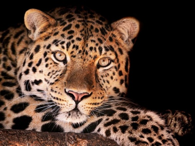 Leopard Spots Look (click to view)