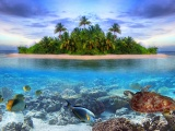 Marine Llife On A Tropical Island