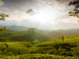 Munnar Hill Station Kerala India