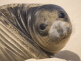 Muzzle Seal Eyes Look Sand