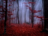 Mystical Foggy Forest In Autumn
