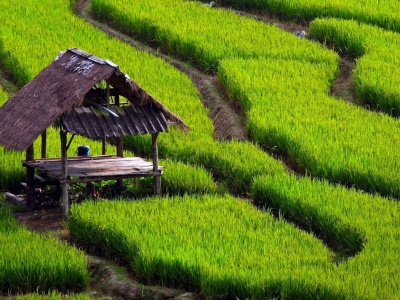 Paddy Fields Houses Beautiful Nature Landscapes