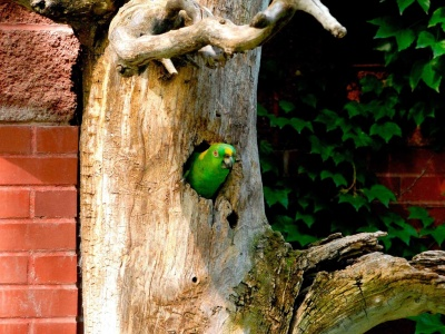Parrot Tree (click to view)