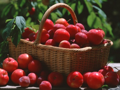 Red Plums In A Basket (click to view)